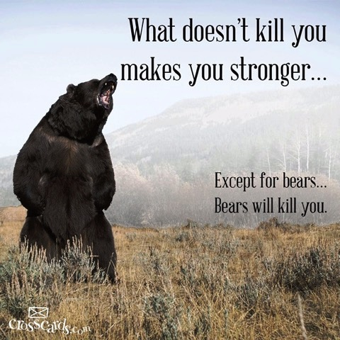 Name:  Bears2.jpg