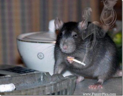 Name:  Cigarette1.jpg Views: 98 Size:  23.9 KB
