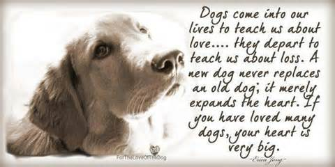 Can A Dog Be Your Best Friend