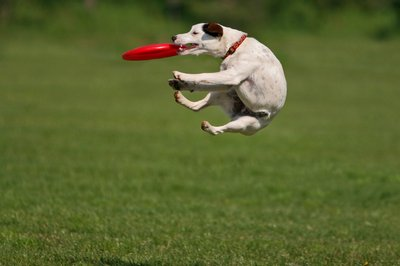 Name:  dog-with-frisbee.jpg