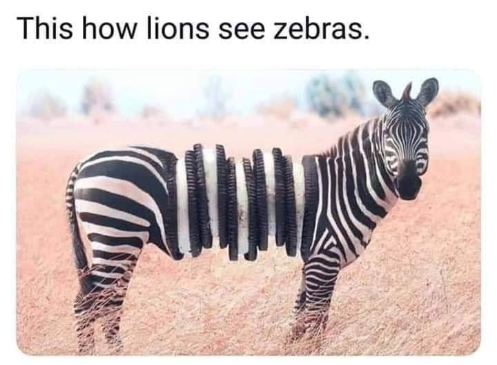 Name:  How lions see zebras 01.jpg