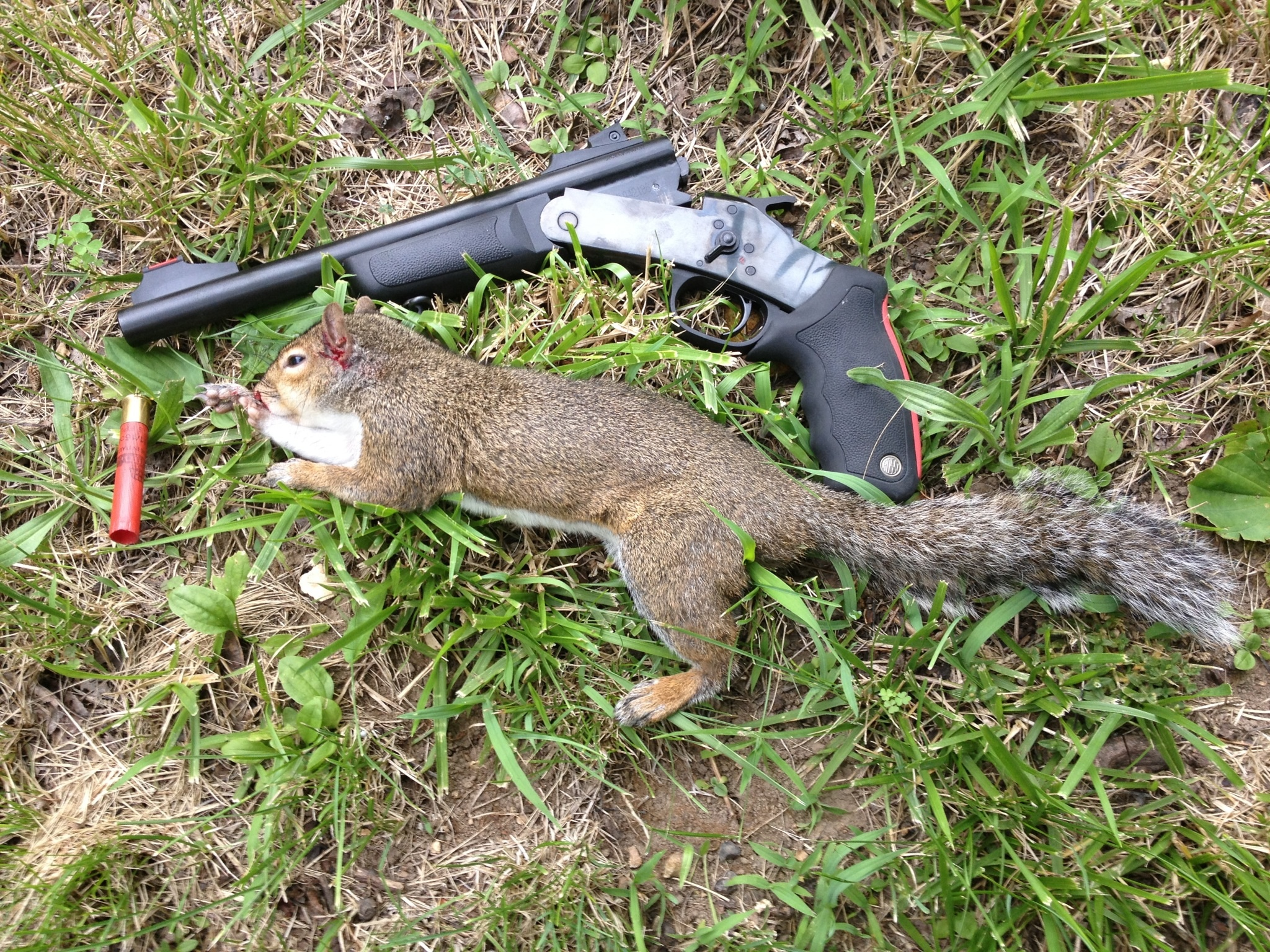 Squirrel Hunting Tips - AllOutdoor.com