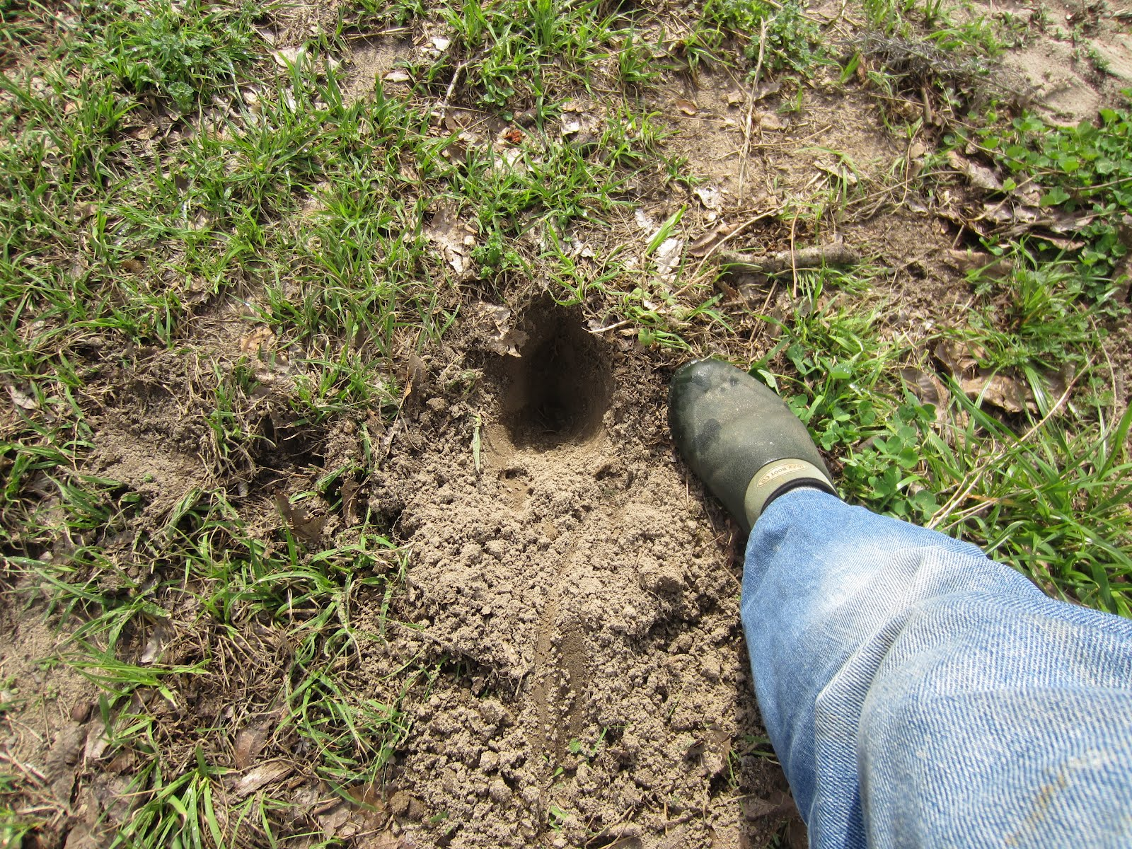how to keep rabbits from digging holes in your yard