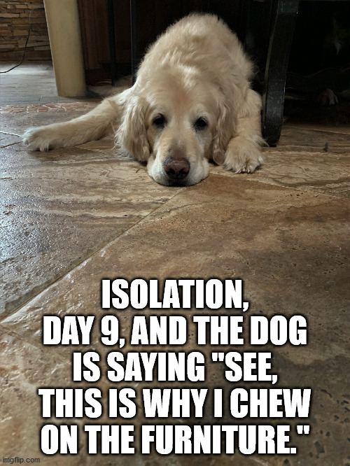 Name:  isolation-day-9.jpg Views: 81 Size:  137.9 KB