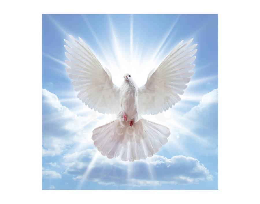 Name:  peace-dove.jpg Views: 45 Size:  31.6 KB