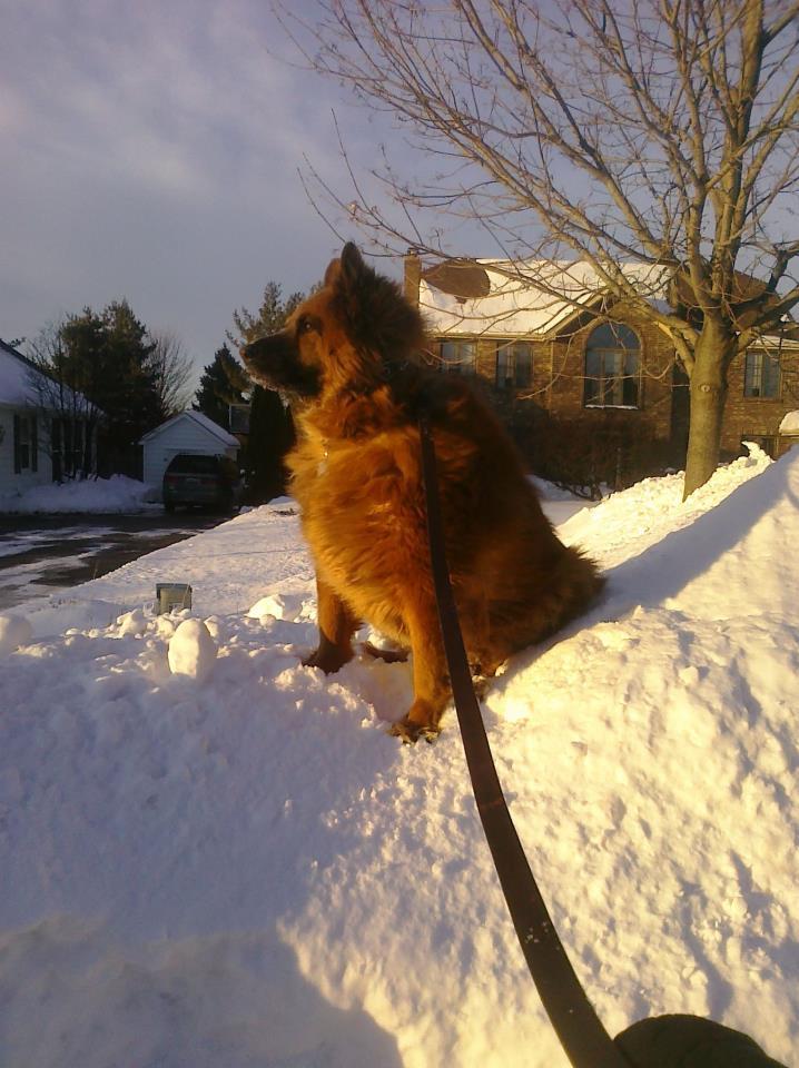 Name:  Rusty snow king.jpg Views: 38 Size:  94.3 KB