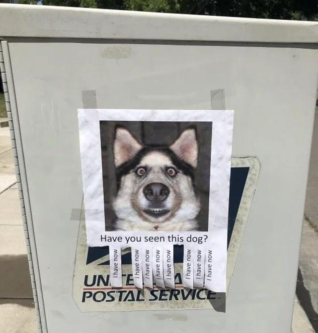 Name:  seen this dog.jpg Views: 77 Size:  106.7 KB