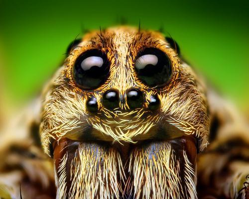 Name:  spider.jpg Views: 15237 Size:  44.3 KB